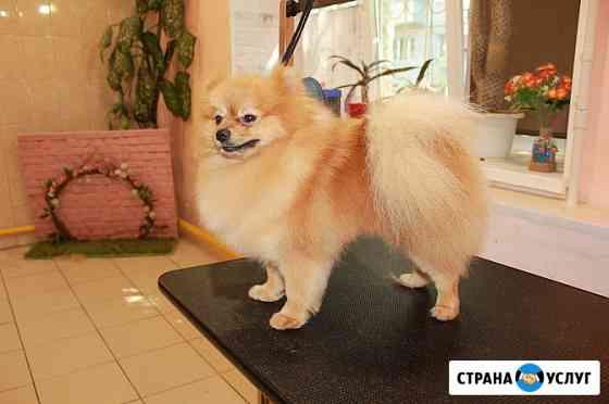 Стрижка собак Томск