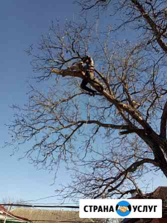 Спил деревьев любой сложности Мостовской
