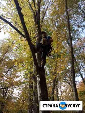 Спил деревьев любой сложности Майкоп