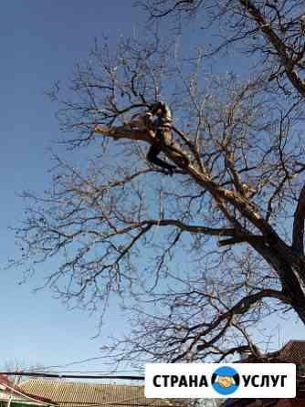 Спил деревьев любой сложности Новокубанск