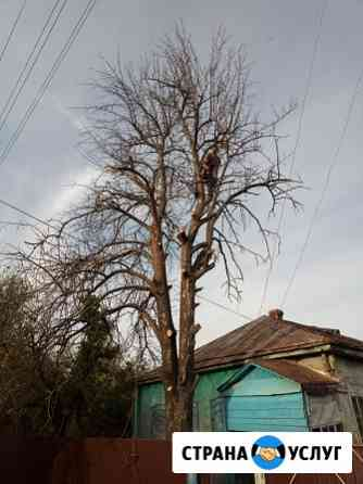 Спил деревьев любой сложности Натырбово