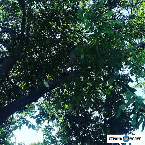 Спил деревьев Таганрог