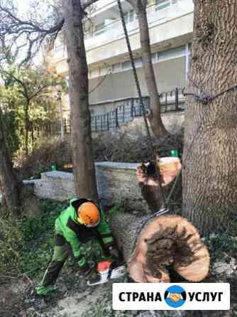 Спил и обрезка деревьев Симферополь Симферополь
