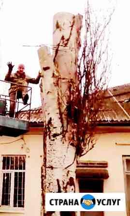 Спил и Обрезка деревьев в Батайске Батайск