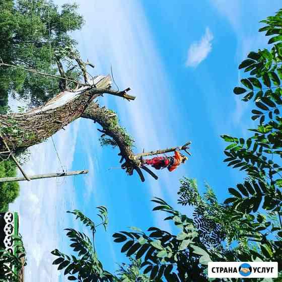 Спилить дерево удаление деревьев Владимир