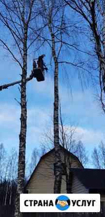 Спил деревьев. Спилить дерево Александров