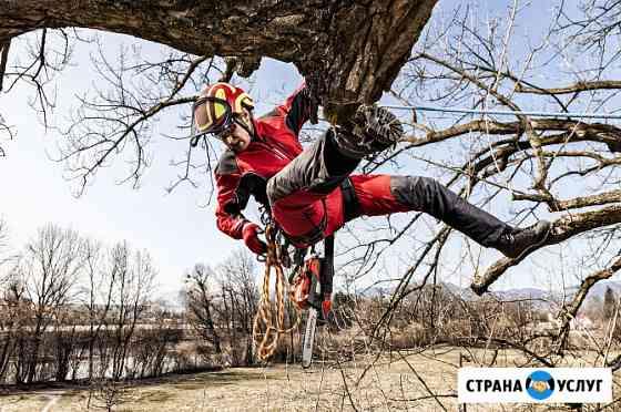 Спиливание подрезка деревьев вырубка участков Йошкар-Ола
