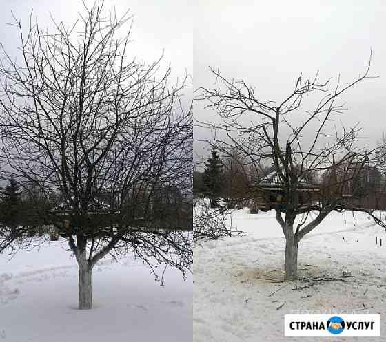 Весенняя обрезка деревьев Ярославль