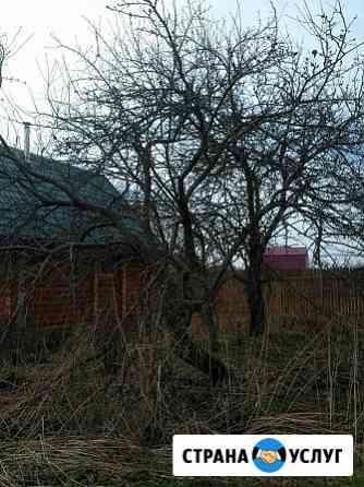 Спил деревьев Ярославль